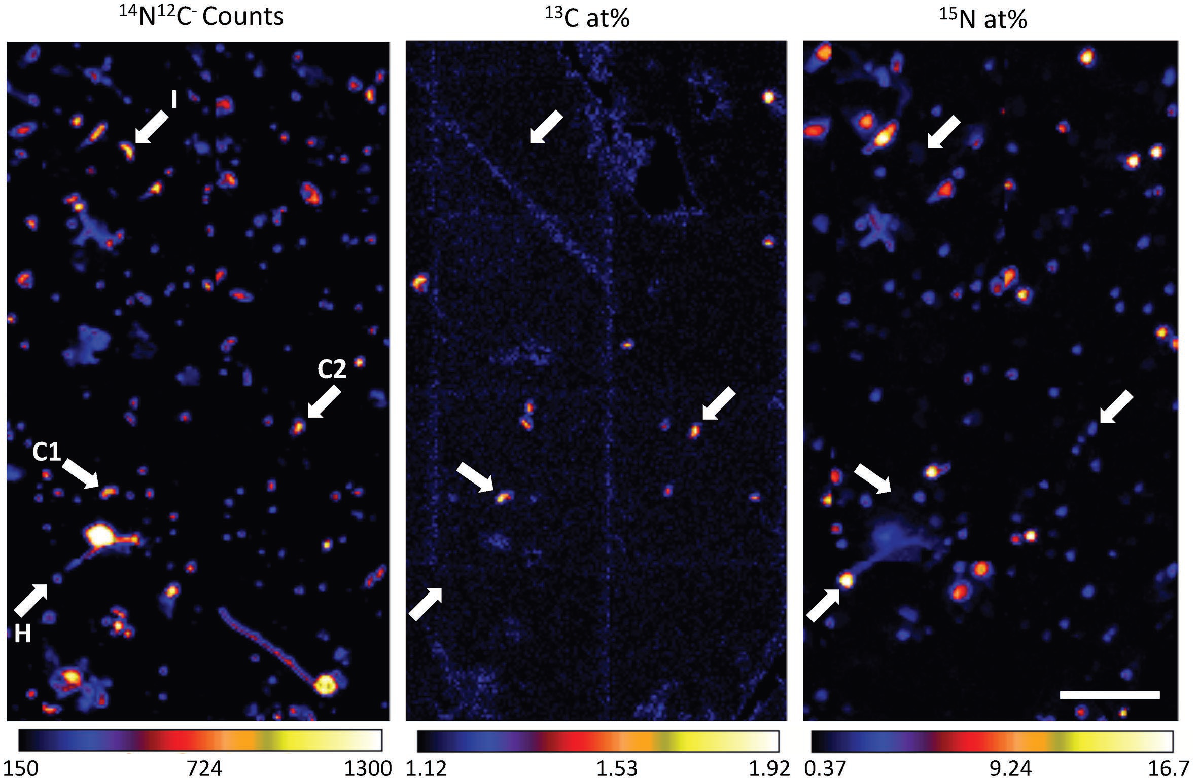 NanoSIP image of cells