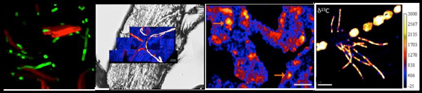 Four NanoSIP images